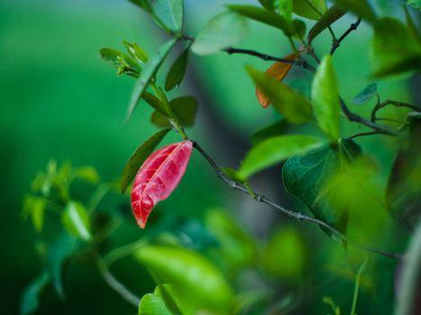 Фото бесплатно ветки, листья, макро