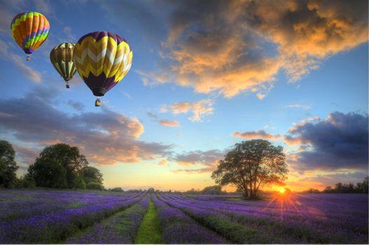 Фото бесплатно закат, поле, лаванда