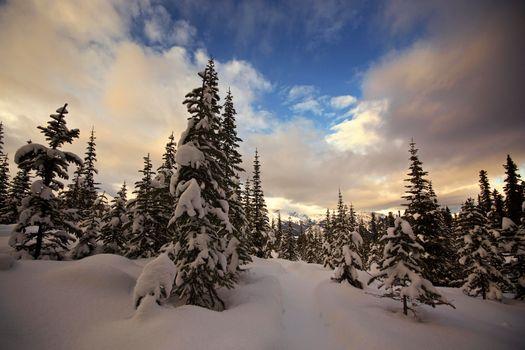 Kananaskis, Alberta, зима, снег, деревья