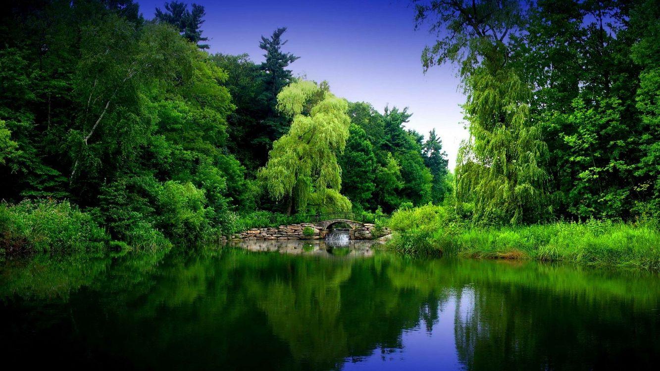 Фото бесплатно озеро, лес, зелень, природа, природа