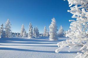 Фото бесплатно снежный елки, сугробы, зима