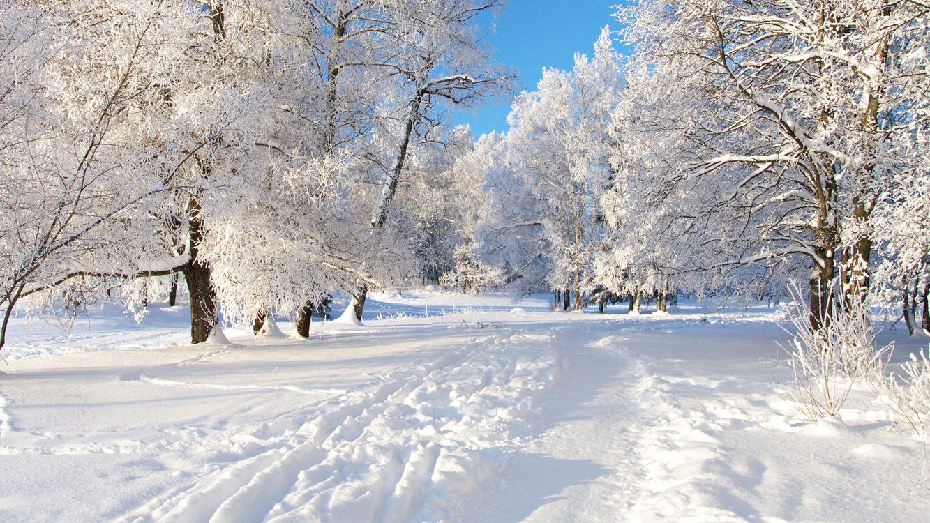 Фото бесплатно Зима, снег, деревья, сугробы, лес, природа, мороз, природа