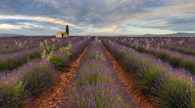 Photo free Plateau de Valensole, France, field