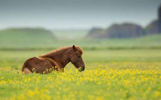 Фото бесплатно поле, конь, морда