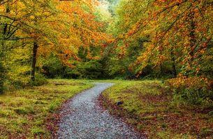 Бесплатные фото осень,деревья,лес,дорога,природа