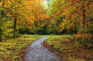 Фото бесплатно осень, деревья, лес, дорога, природа