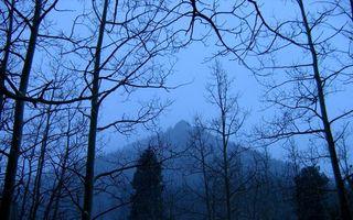 Бесплатные фото осень,лес,деревья,ветки,гора,небо
