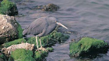 Фото бесплатно птица черная, клюв, крылья
