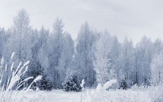 Заставки лес, снег, иней