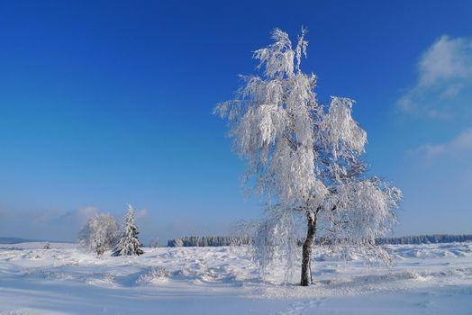 Фото бесплатно зима, снег, деревья
