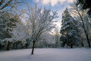 Бесплатные фото зима,снег,лес,деревья,пейзаж