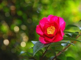 Photo free petals, camellia, leaves
