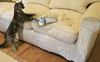 Бесплатные фото кот,пылесос,диван,шерсть,уборка