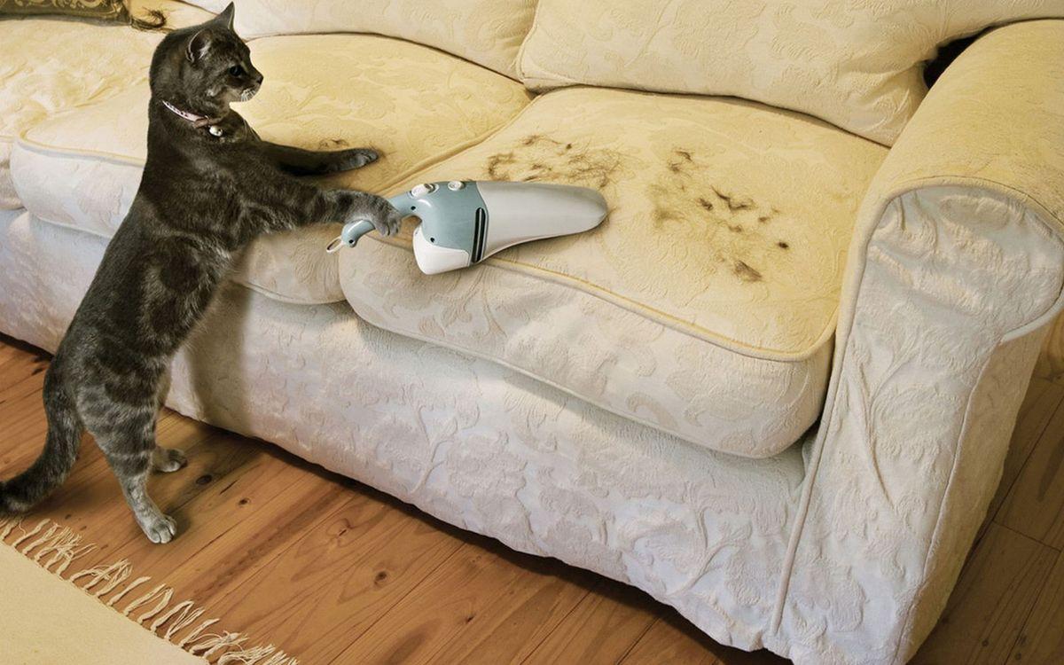 Фото бесплатно кот, пылесос, диван, шерсть, уборка, юмор