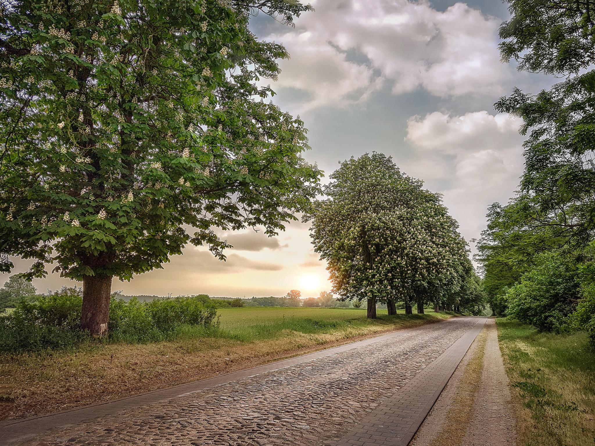 обои закат, поле, дорога, деревья картинки фото