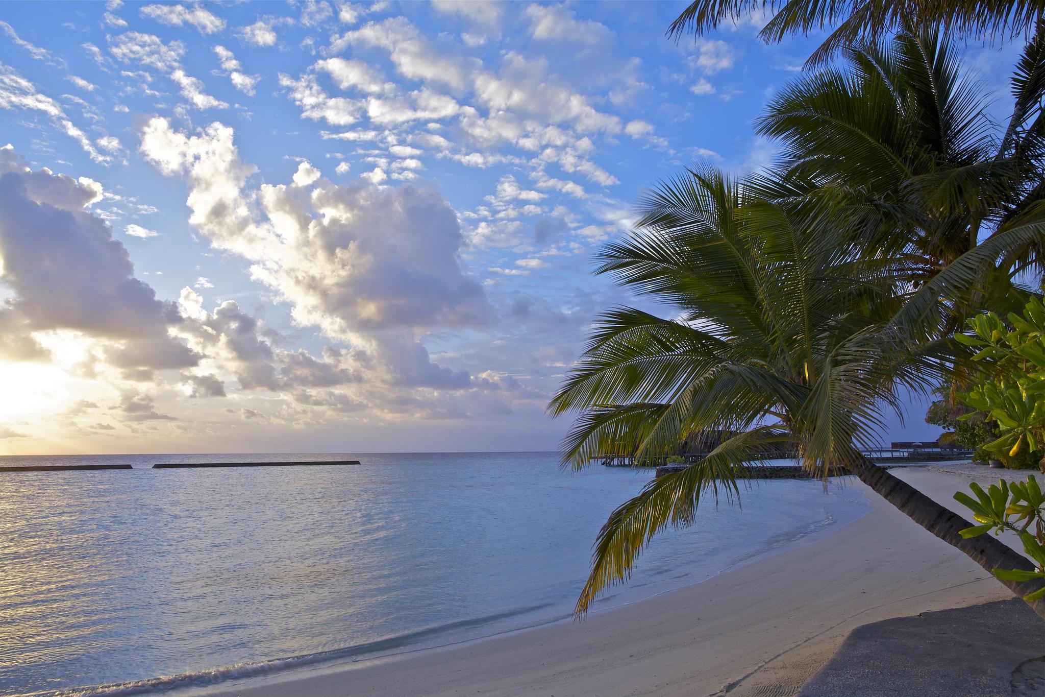 Обои закат, море, пальмы, берег