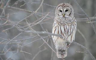 Бесплатные фото сова,клюв,глаза,перья,хвост,ветви