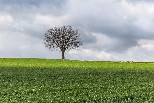 Photo free lone tree, landscape, landscapes