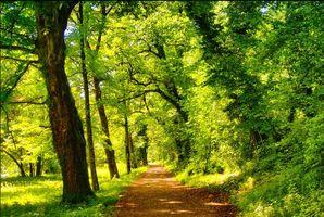 Бесплатные фото лес,парк,деревья,дорога,пейзаж