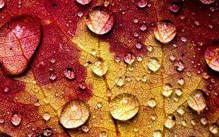 Бесплатные фото листок,капли,роса