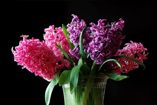 Бесплатные фото Гиацинт,цветы,ваза,букет,флора