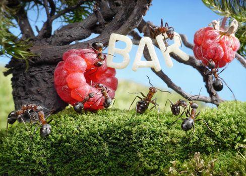 Бесплатные фото муравьи,насекомые,макро