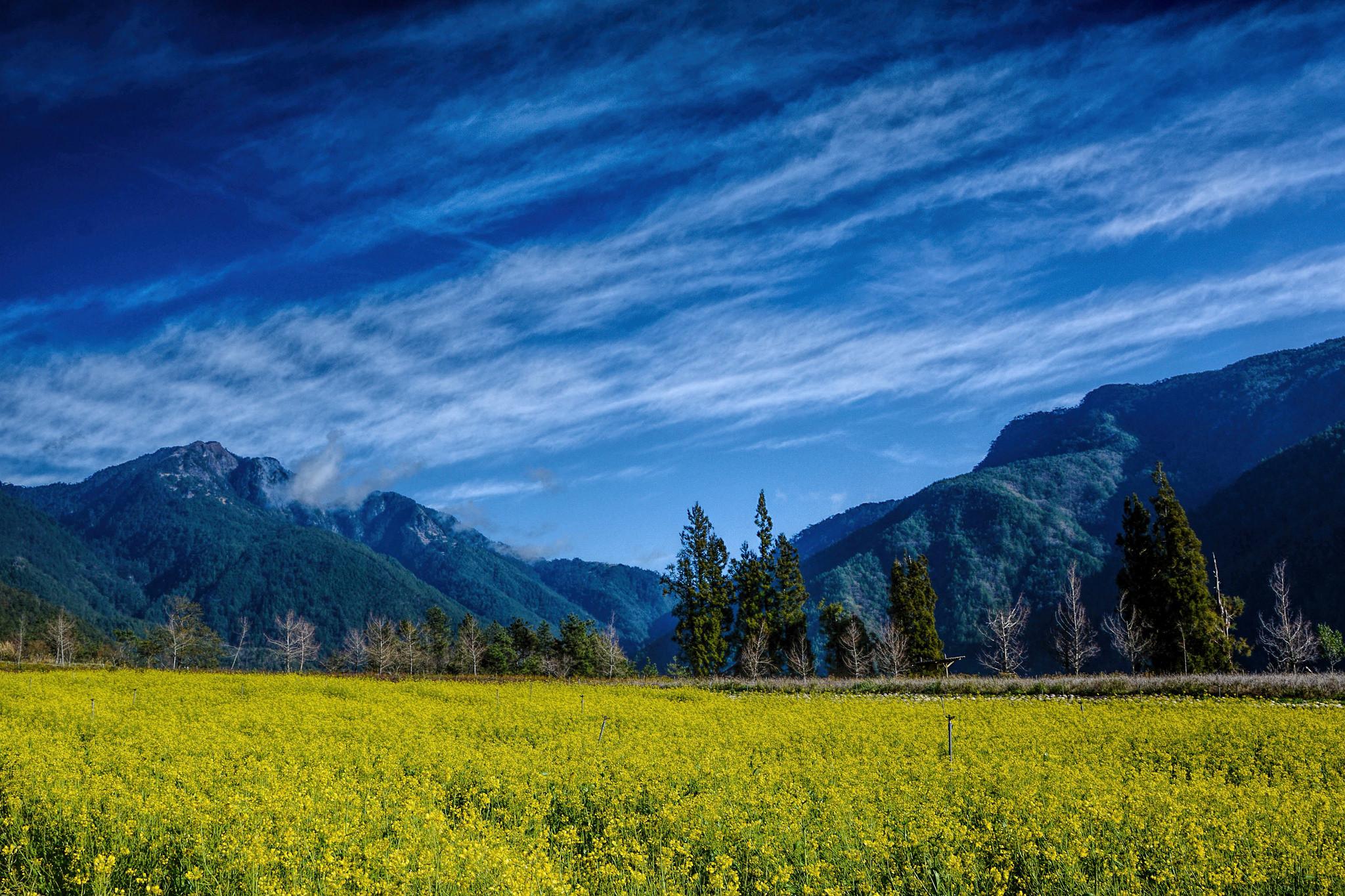 обои поле, горы, цветы, деревья картинки фото