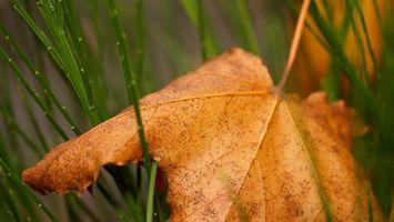 Бесплатные фото трава,зеленая,лист,сухой,желтый,прожилки