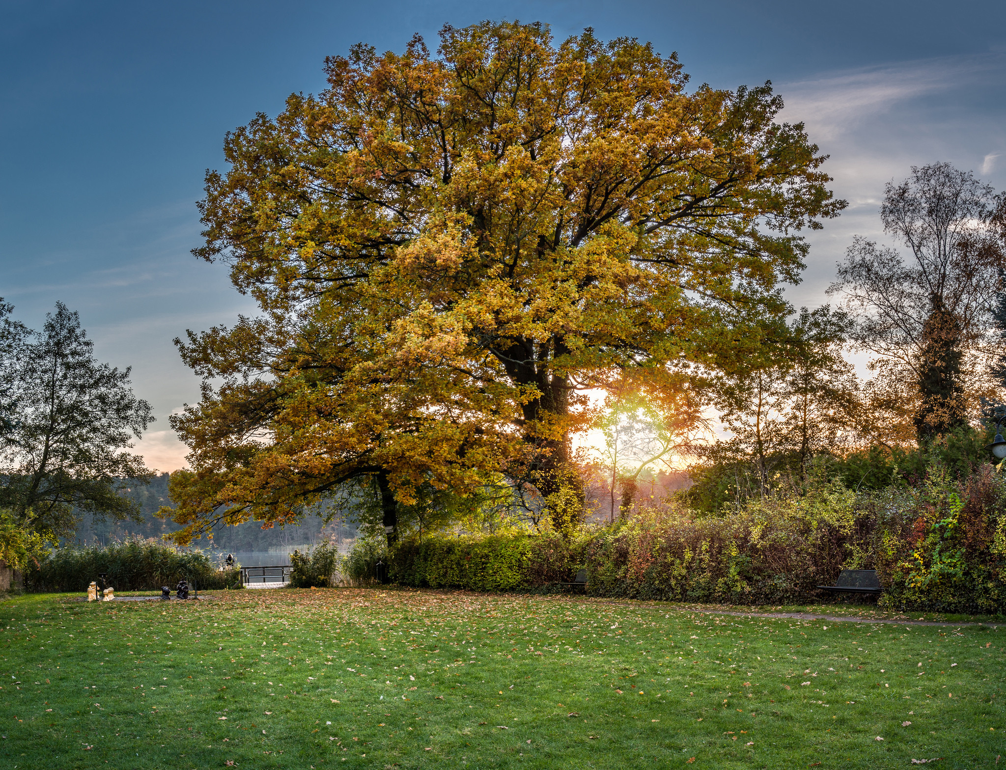 обои закат, поле, парк, деревья картинки фото