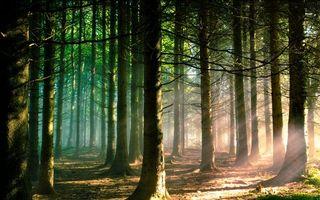 Бесплатные фото лес, природа, свет