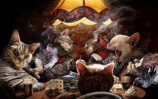 Фото бесплатно кошки, карты, дым
