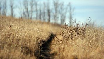 Photo free path, brown, field
