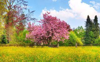 Фото бесплатно сирень, дерево, забор