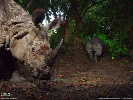 Фото бесплатно носорог, листва, деревья