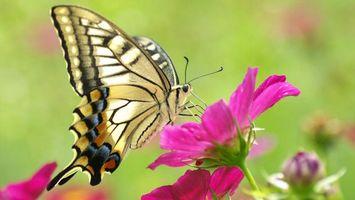 Бесплатные фото бабочка,растение,крылья,лепестки,стебель,трава,зелень