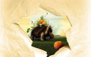 Бесплатные фото черепаха,панцирь,лапы,персик,бумага,картинка,ромашки