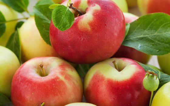 Фото бесплатно фрукты, яблоки, спелые, хвостик, листья, зеленые, еда