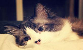 Заставки кот, лежит, окрас