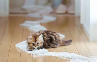 Фото бесплатно котенок, шерсть, взгляд