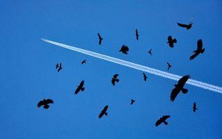 Фото бесплатно небо, голубое, птички