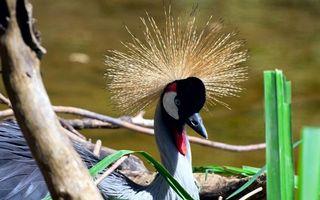 Бесплатные фото павлин,хохолок,клюв,перья,ветки,сухие,птицы