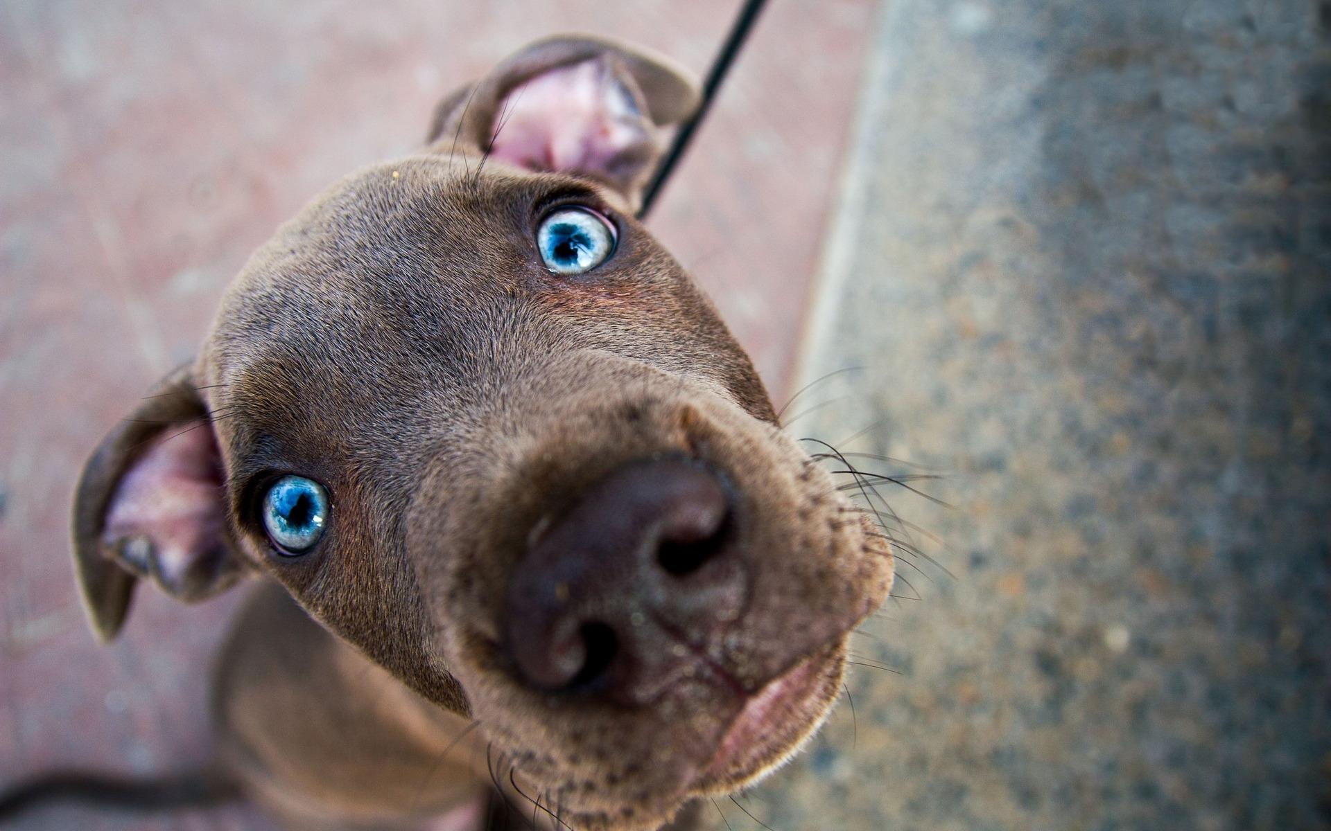 пес, морда, глаза