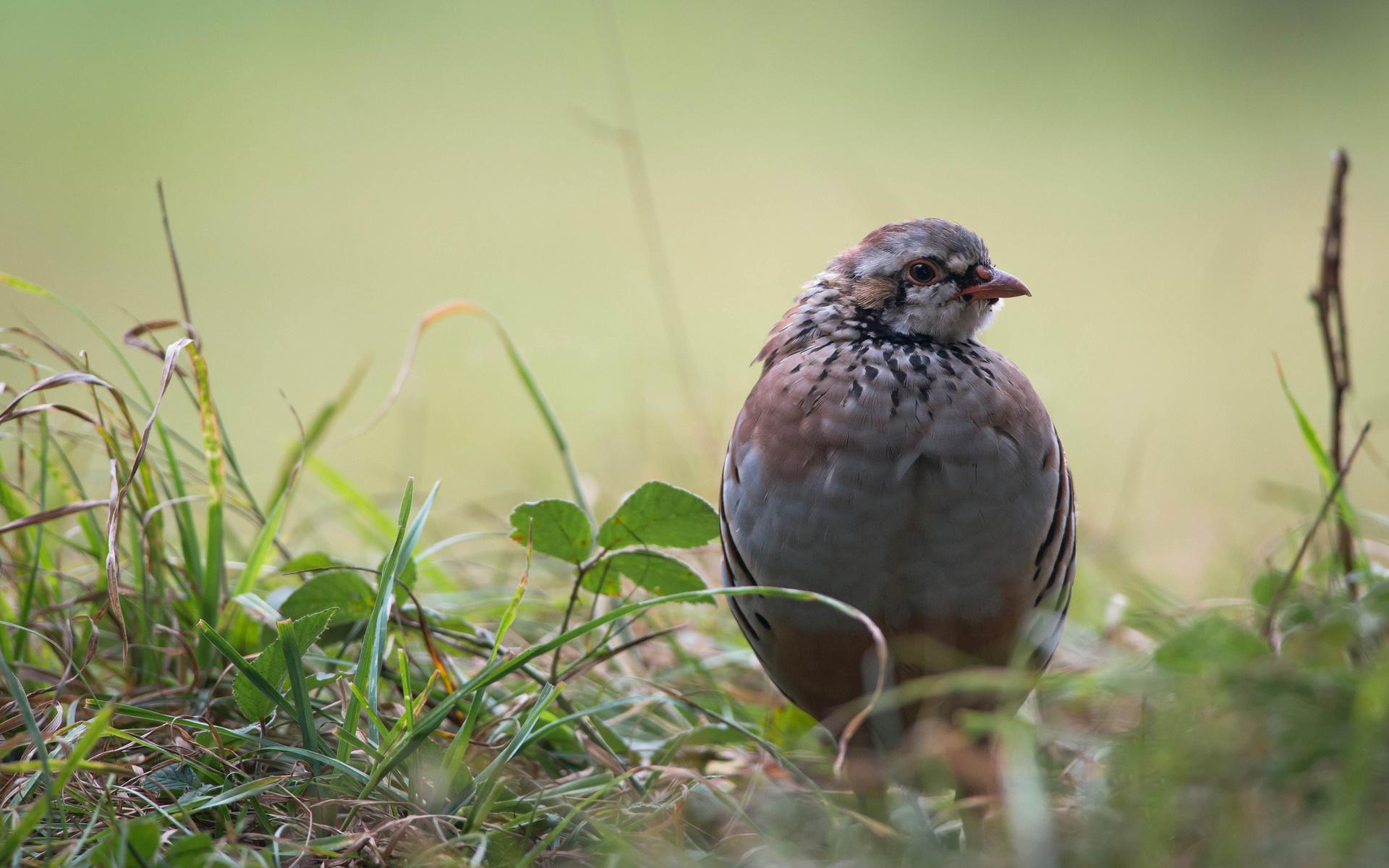 птица, смотрит, перья