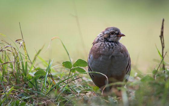Бесплатные фото птица,смотрит,перья,голова,трова,зеленая,птицы