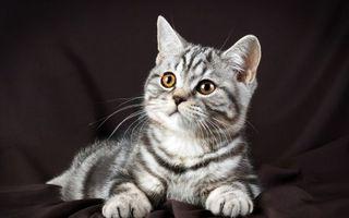 Фото бесплатно слушай, кошки, животное