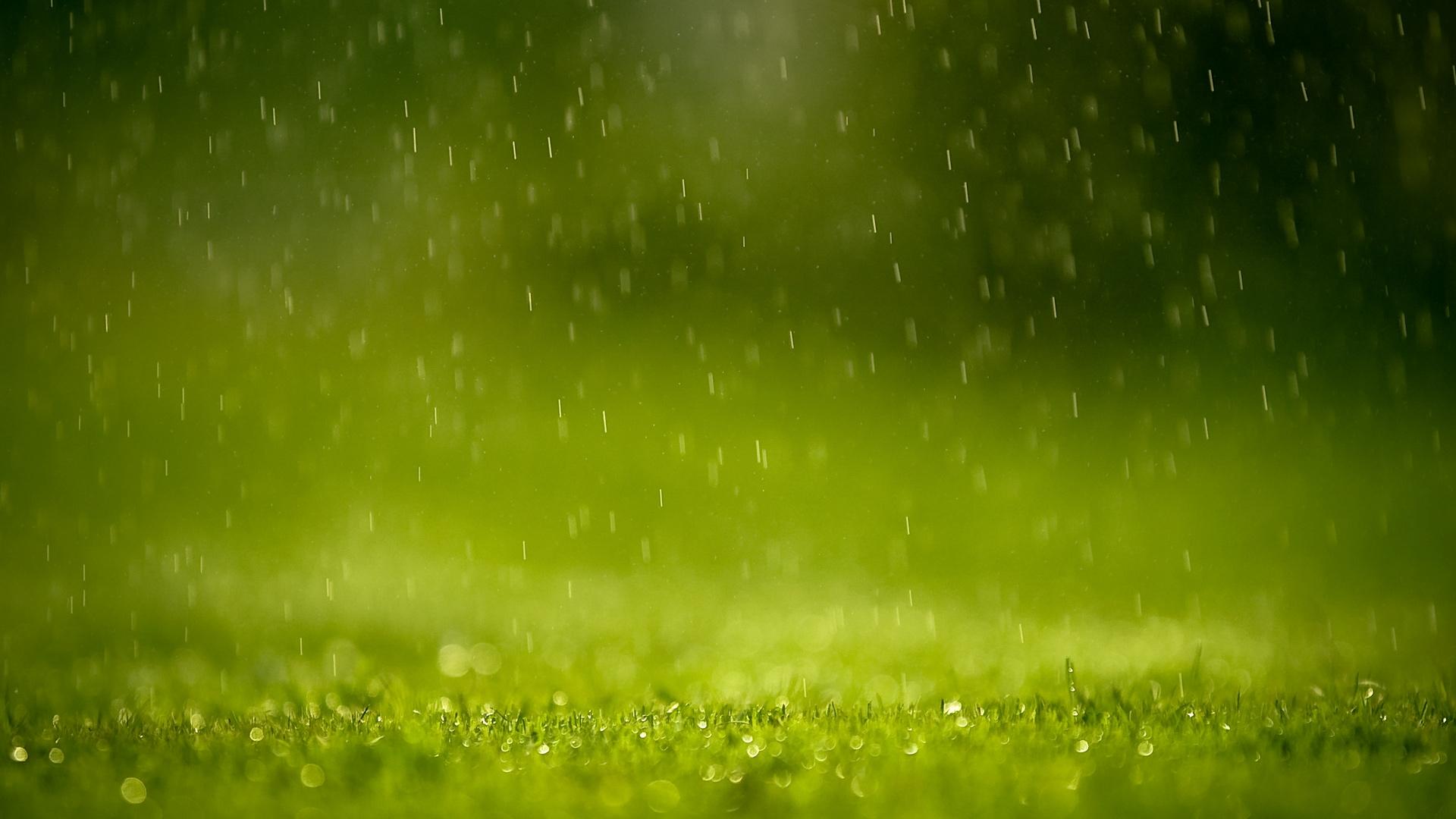 трава, газон, зеленый