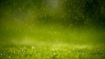 Заставки трава, газон, зеленый, дождь, капли, брызги, природа
