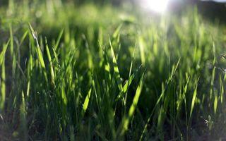 Фото бесплатно трава, зеленая, свет