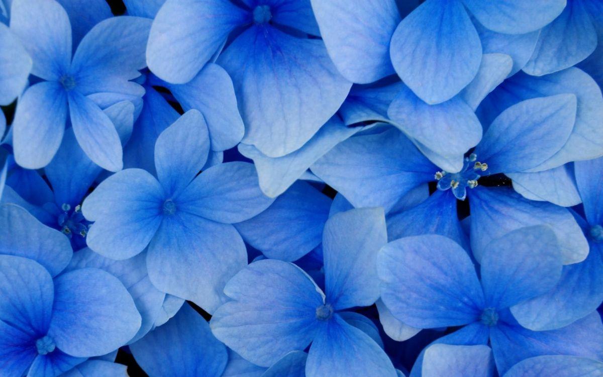 Фото бесплатно соцветие, цветы, листья - на рабочий стол