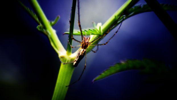 Photo free insect, brown stem, green